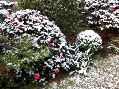 庭に積った雪