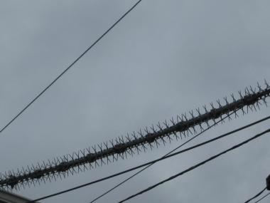 鳥害防止材料電線に
