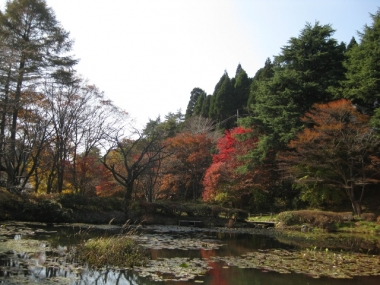 池,西入口紅葉