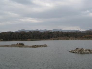 昆陽池,木が切られた小島