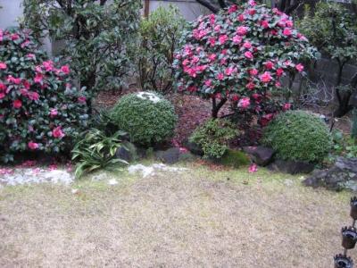 積もった雪が解けた庭