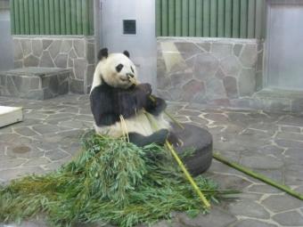 タンタン 食事 竹