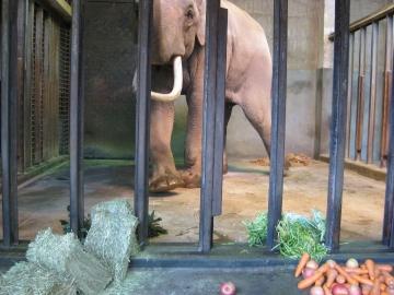食べ物を前にした象マック