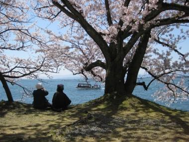 桜と遊覧船
