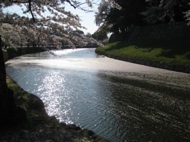 内濠の花筏,内濠の景色