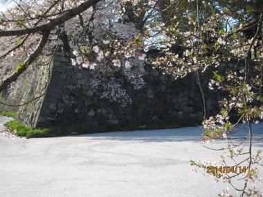 中濠の花の浮橋