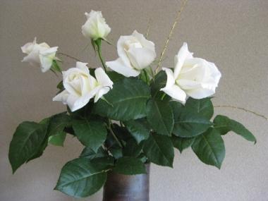 白い薔薇 パスカリ