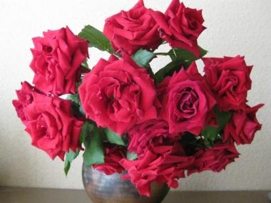赤い薔薇 カールレッド