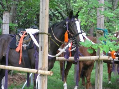 葵祭に参加したお馬さん