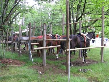 葵祭に参加したお馬さんたち