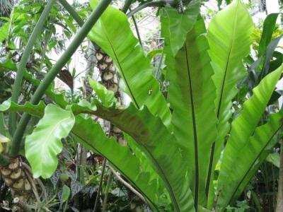 南国・亜熱帯の植物に蛹