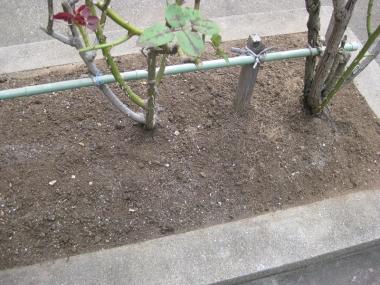 土をかぶせ作業完了