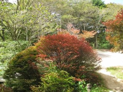 秋色に染まり始めた木