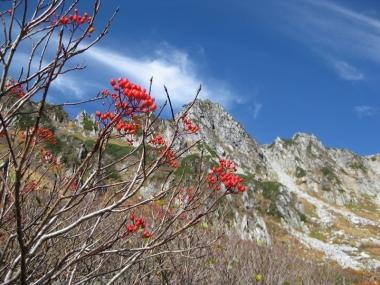 宝剣岳とナナカマドの実