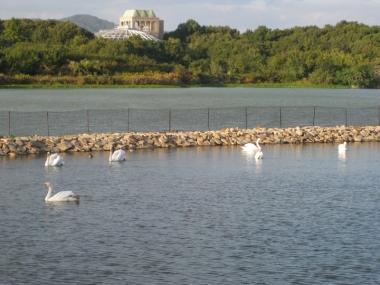 給餌池側から野鳥の島の方を見る
