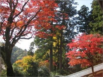 法堂前からの紅葉・黄葉