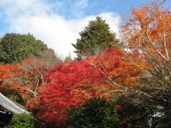 霊鑑寺 庭園の紅葉