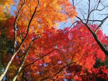 霊鑑寺庭園の紅葉2