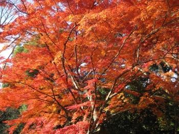 霊鑑寺庭園の紅葉3