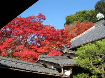 霊鑑寺と紅葉