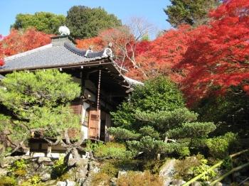 霊鑑寺本堂と紅葉
