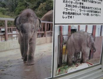 子象 結希 2