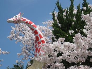 桜とキリンの像
