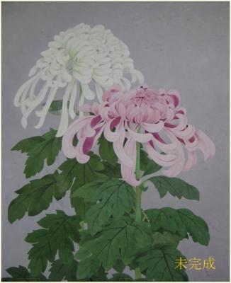 大輪の菊の絵