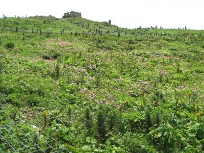 山頂のお花畑,花が少ない