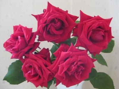 庭で咲いた赤い薔薇