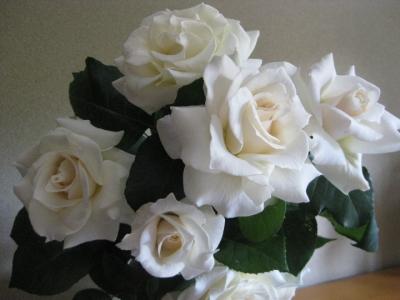 庭で咲いた白い薔薇