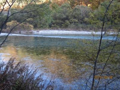 黄金色のカラマツが梓川に映り込んでいる風景