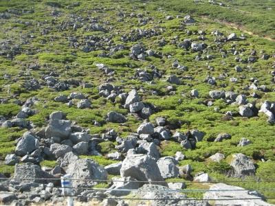 ゴロゴロ石が目立つ