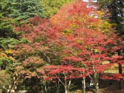 紅葉,黄葉