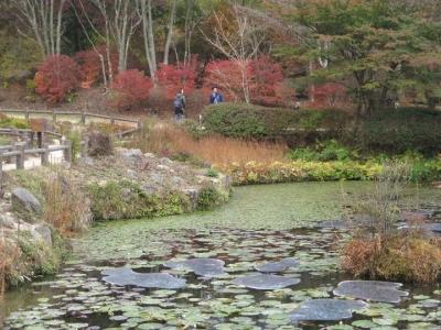 池には睡蓮