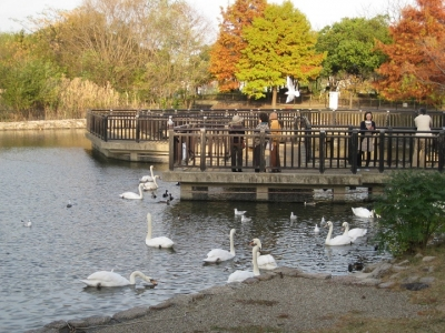 昆陽池・給餌池の野鳥観察橋