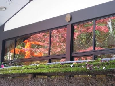 建物の窓に紅葉と鳥居が映り込み美しい