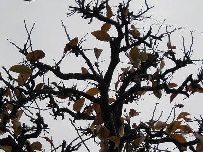 紅葉した葉を揺すって落とした