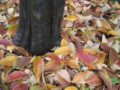 カリンの根元に散った紅葉
