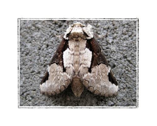 名前の分からない昆虫 蛾(ガ)の写真