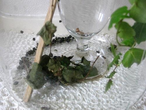 葉にくるまった蛾の幼虫