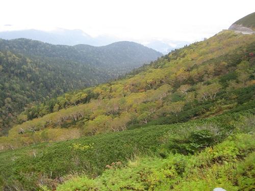 木々の黄葉が始まっている風景