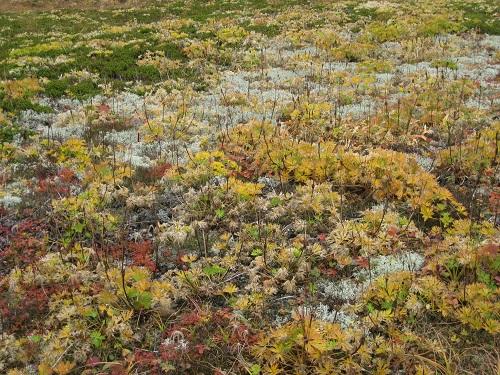 紅葉・黄葉のお花畑の植物