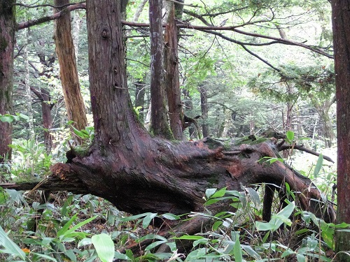 面白い形の木の根元