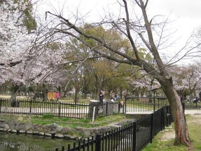 桜の枯木 2