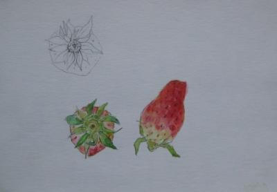 イチゴのスケッチ 2