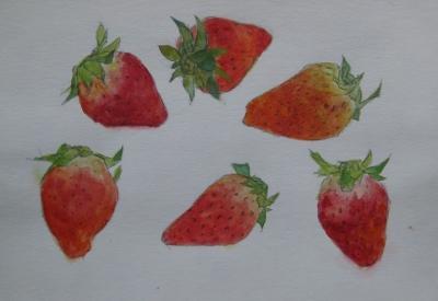 イチゴのスケッチ 1