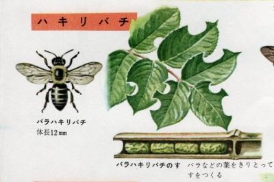 ハキリバチの図