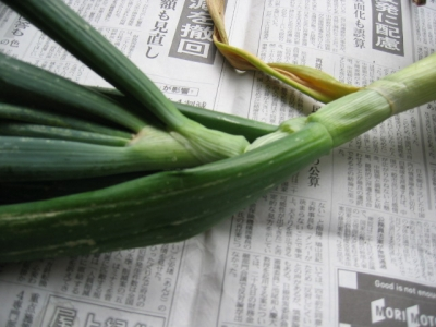 玉ねぎの茎・葉