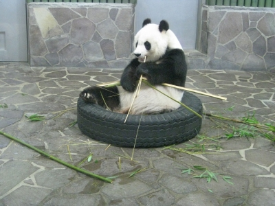 タンタン食事中 竹